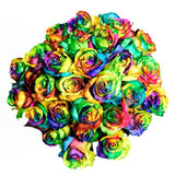 Tinted Rainbow Roses