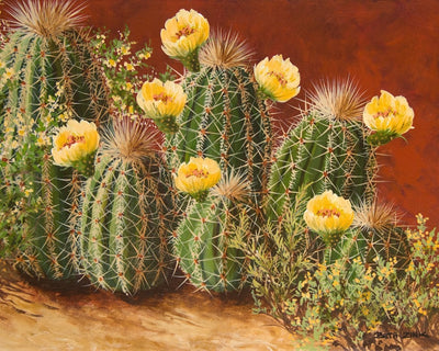 Yellow Flowering Hedgehogs by Beth Zink