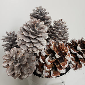 Pinecone On a Stand