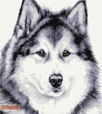 Alaskan Malamute counted cross stitch kit