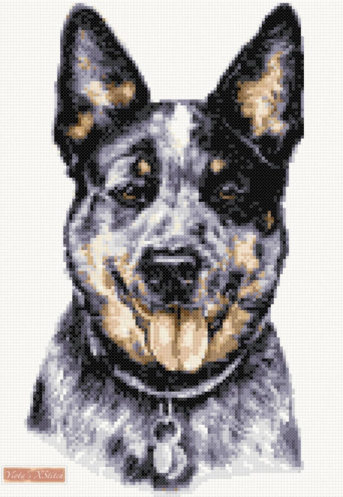 Australian cattle dog counted cross stitch kit