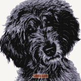 Black labradoodle counted cross stitch kit