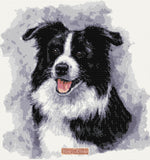 Border collie No2 counted cross stitch kit