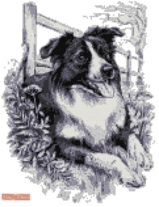 Border collie BW counted cross stitch kit
