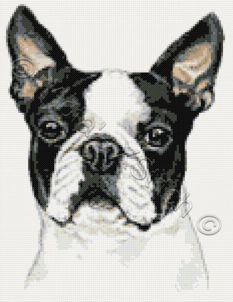 Boston Terrier counted cross stitch kit