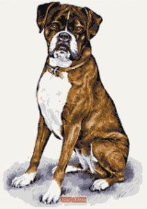 Boxer brindle counted cross stitch kit