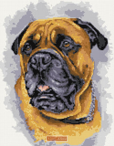 Bull Mastiff counted cross stitch kit