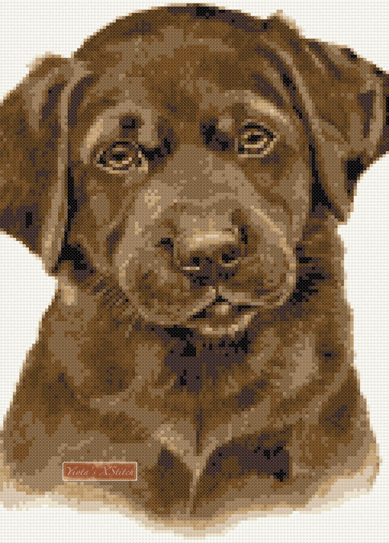 Chocolate labrador puppy counted cross stitch kit