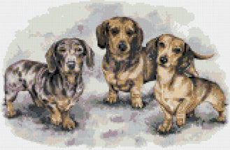 Dachshund puppies counted cross stitch kit
