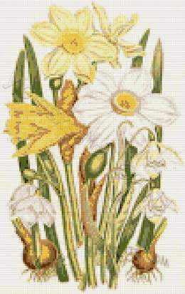 Daffodils and snowdrops counted cross stitch kit