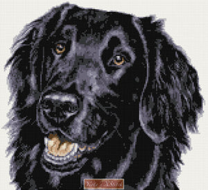 Flat coated black retriever (v2) counted cross stitch kit