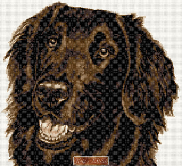 Flat coated chocolate brown retriever counted cross stitch kit