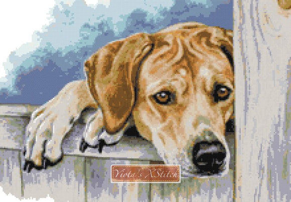 Golden labrador No4 counted cross stitch kit