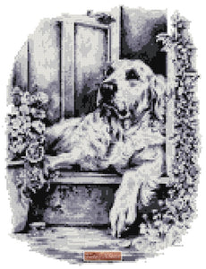 Golden retriever in black, white and gray shades in counted cross stitch kit