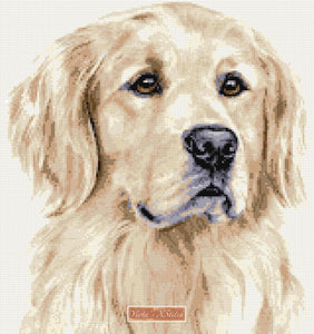 Golden retriever No5 counted cross stitch kit