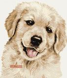 Golden retriever puppy counted cross stitch kit