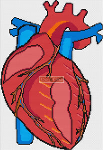 Human heart counted cross stitch kit