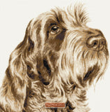 Italian Spinone No1 counted cross stitch kit
