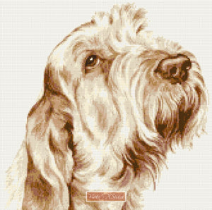 Italian Spinone No2 counted cross stitch kit