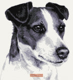 Black Jack Russell counted cross stitch kit