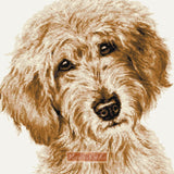 Labradoodle cream caramel counted cross stitch kit