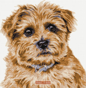 Norfolk Terrier No1 counted cross stitch kit