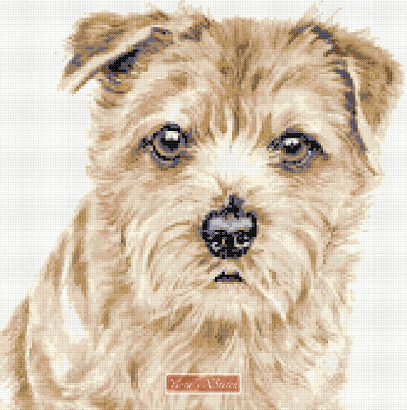 Norfolk Terrier No2 counted cross stitch kit