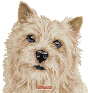 Norwich Terrier counted cross stitch kit