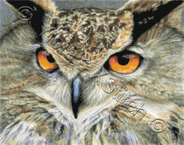 Orange eyed owl counted cross stitch kit