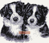 Pair of border collie puppies counted cross stitch kit