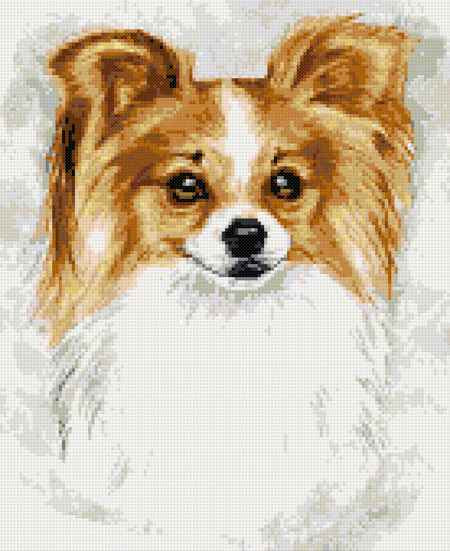 Papillon golden counted cross stitch kit