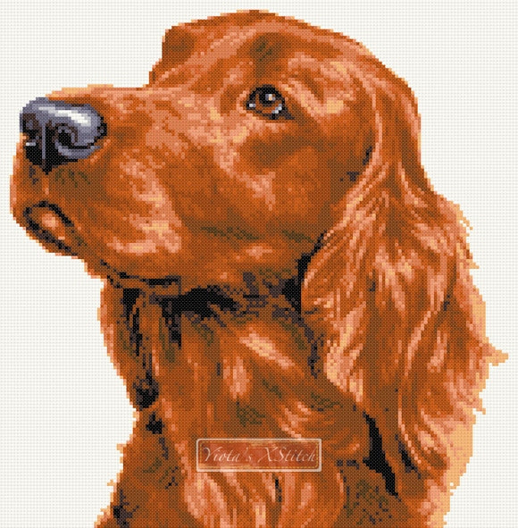 Red Setter counted cross stitch kit