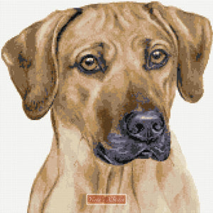 Rhodesian Ridgeback counted cross stitch kit