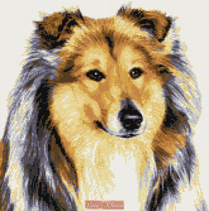 Rough collie (v2) counted cross stitch kit