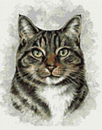 Tabby cat portrait counted cross stitch kit