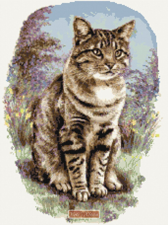 Tabby cat counted cross stitch kit