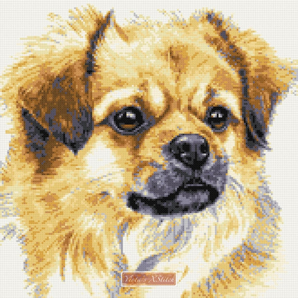 Tibetan Spaniel counted cross stitch kit