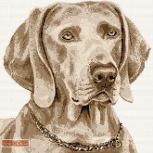 Weimaraner counted cross stitch kit