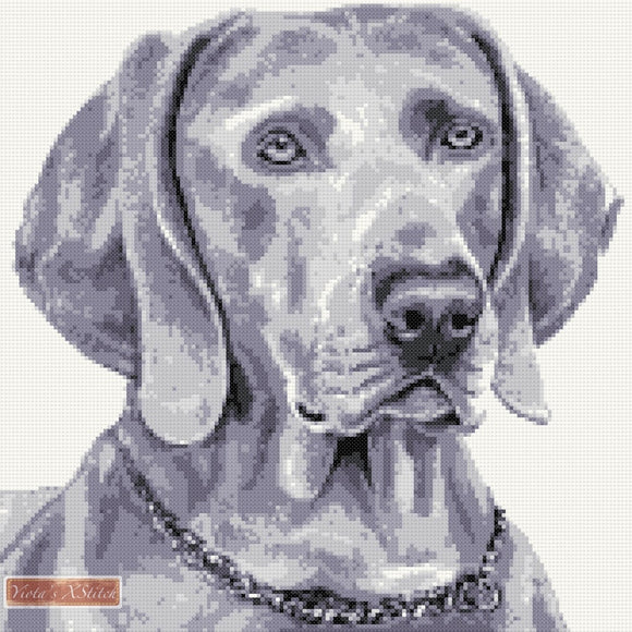 Weimaraner in gray colour counted cross stitch kit