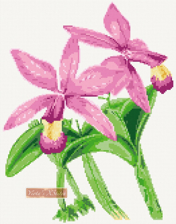 Cattleya superba orchid counted cross stitch kit