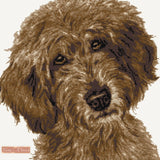 Chocolate labradoodle counted cross stitch kit