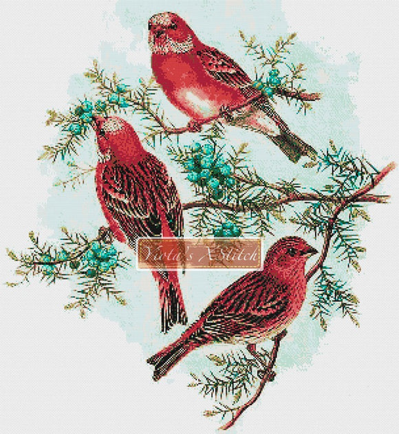 Rosefinch birds counted cross stitch kit