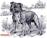 Staffordshire bull terrier in black and white counted cross stitch kit