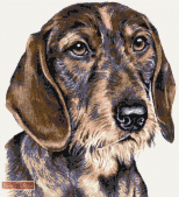 Wire haired dachshund counted cross stitch kit