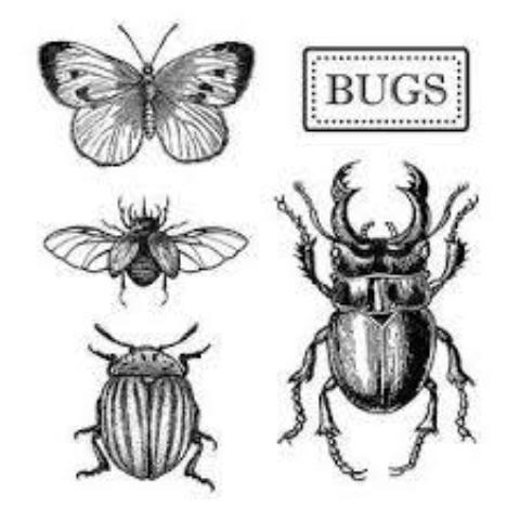 Stamperia Natural Rubber Stamps 10x10cm - Bugs - WTKCC151