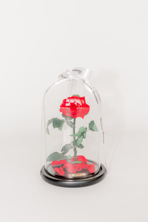 Enchanted Rose ( Red )