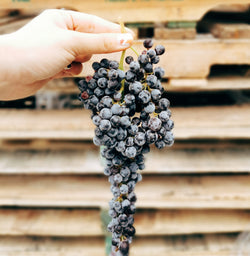USA Champagne Grapes