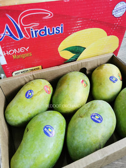 Chaunsa Pakistan Honey Mango (Box Set)