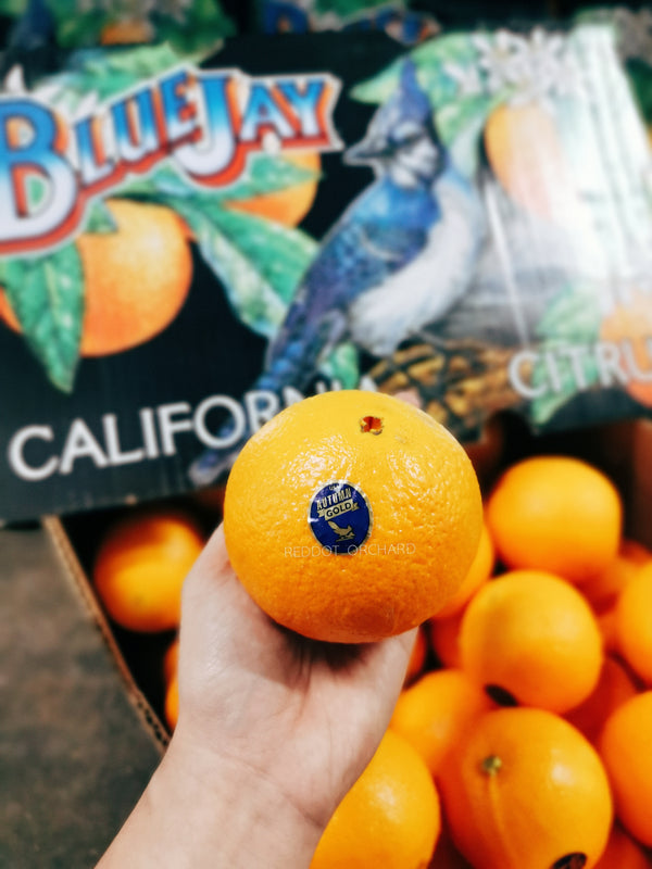 BlueJay Autumn Gold 4012 Navel Orange (Jumbo)