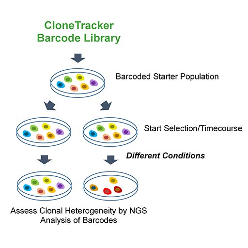 CloneTracker Barcode Libraries and Kits